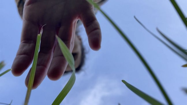 hand reaching towards lawn, sky above, plant's eye view