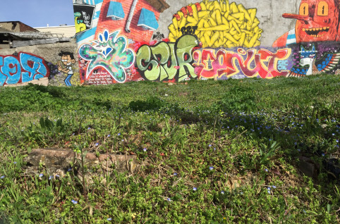 An urban meadow at the corner of Suydam Street and Central Avenue, Bushwick, Brooklyn, April 2015