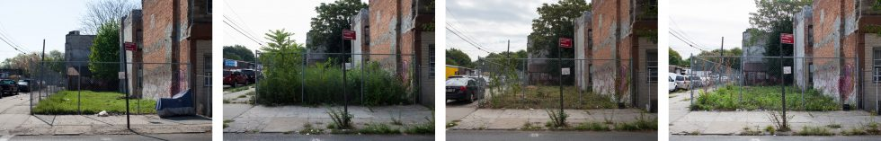 Feral Landscape Typologies (The rise, fall and rise of a lot at the corner of Irving Avenue and Cooper Avenue from May - October 2015)