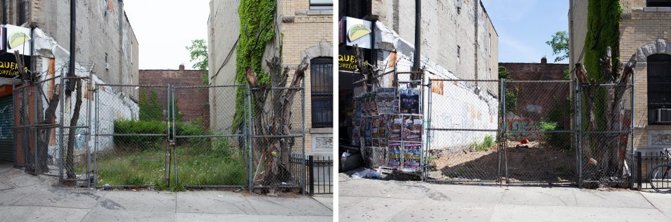 Feral Landscape Typologies (Myrtle Avenue and Grove Street, August 2015 and May 2016)